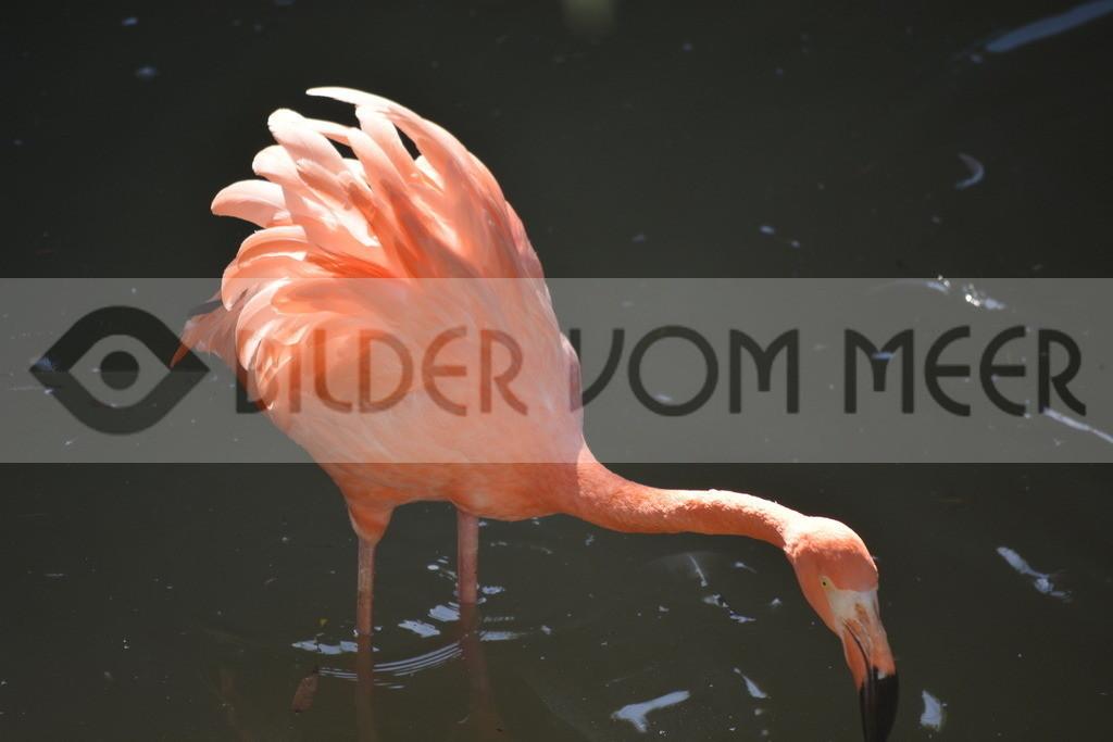 Fotoausstellung Meer Bilder | Roter Flamingo bei untergehender Sonne