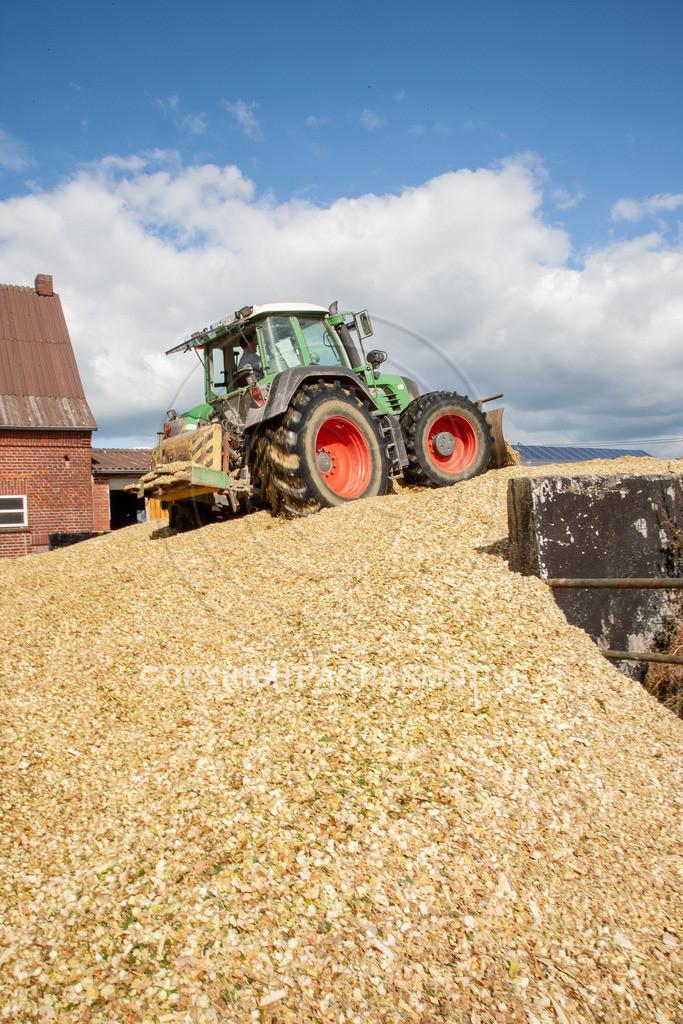 20080914-IMG_9125 | Silomais wird gehäckselt - AGRARFOTO Bilder aus der Landwirtschaft