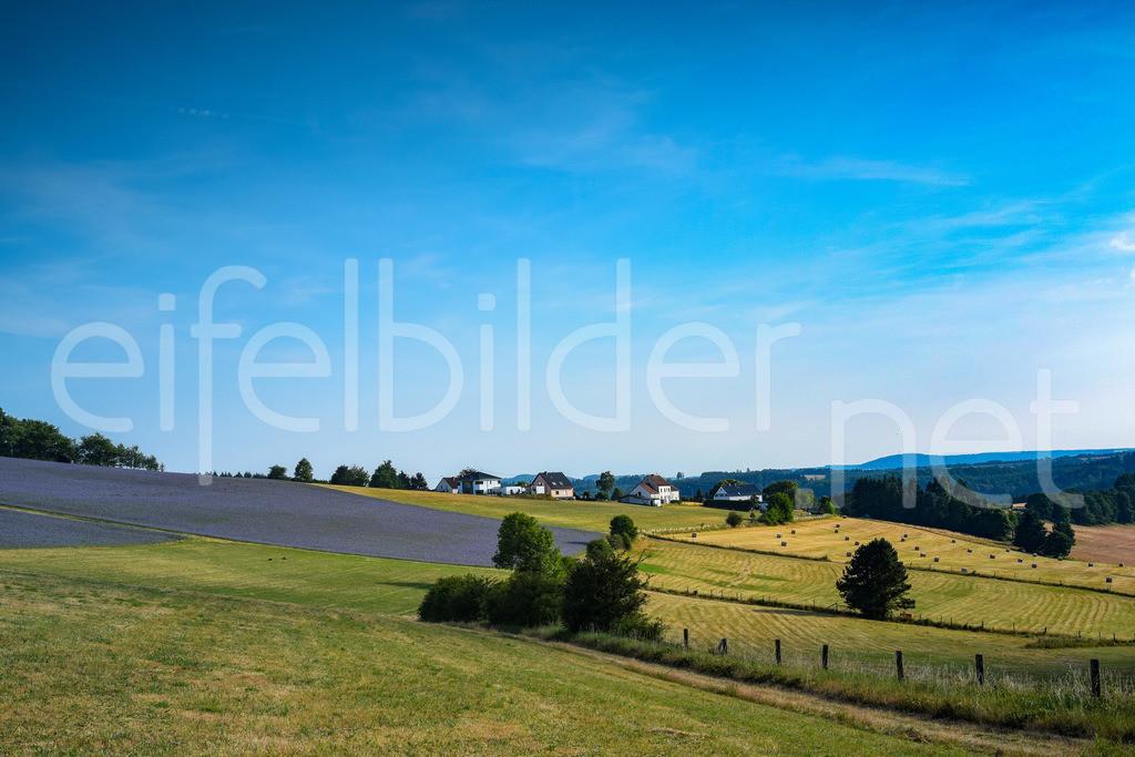 Landschaft bei Tettscheid   bunte Felder vor Tettscheid in der Eifel (Vulkaneifel)