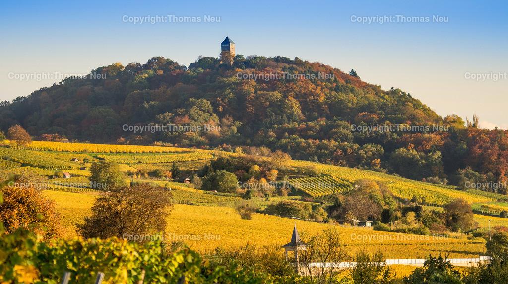 _DSC2083 | Herbstlich gefärbte Weinberge vor der Starkenburg in Heppenheim,