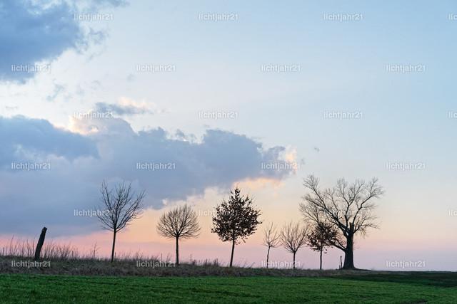Baumreihe mit markanter Wolkenformation im Abendlicht | Reihe von Baumsilhouetten ohne Blätter mit unterschiedlichen Formen an einem Feldweg vor einer markanten Wolkenformationion im Abendlicht, Sonnenstrahlen, zarte Rottöne am Hímmel - Location Deutschland