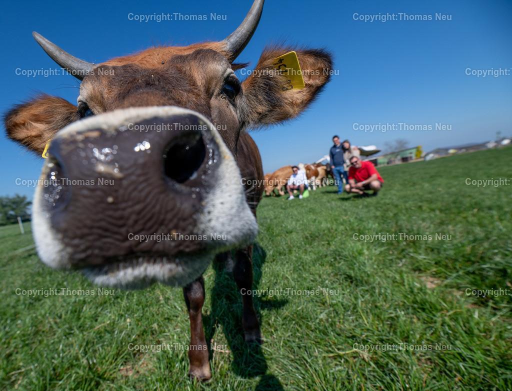 DSC_9970 | Bensheim, Schwanheim, FamilieSchweikert in Schwanheim nach 50 Jahren Viehhaltung jetzt mit ihren Rindern auf die Weiden, ,, Bild: Thomas Neu