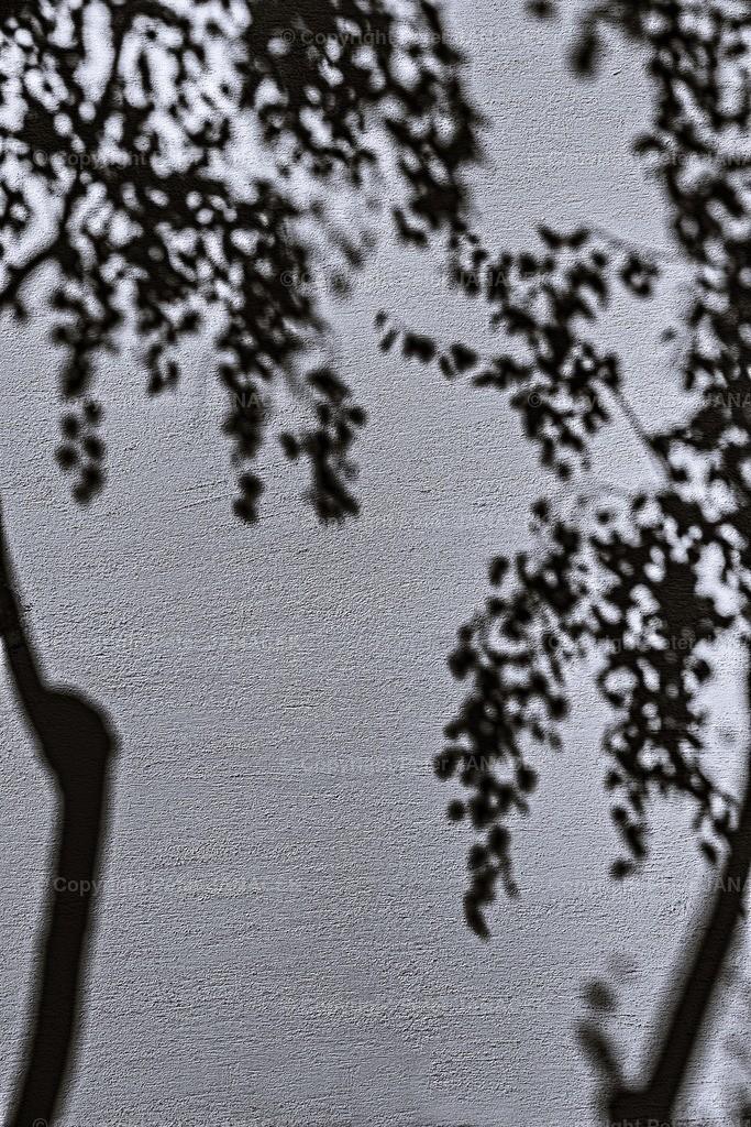Birken-wirken