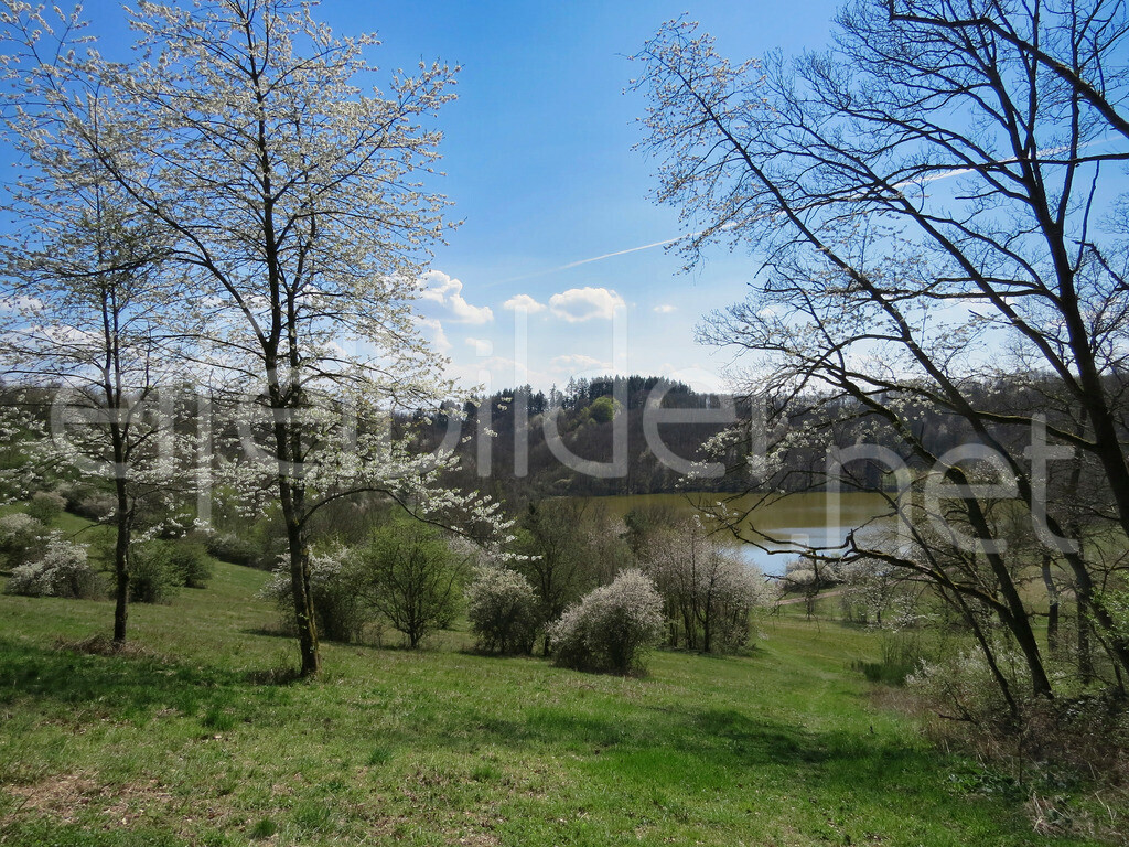 Frühling am Immerather Maar | Immerath in der Eifel (Vulkaneifel)