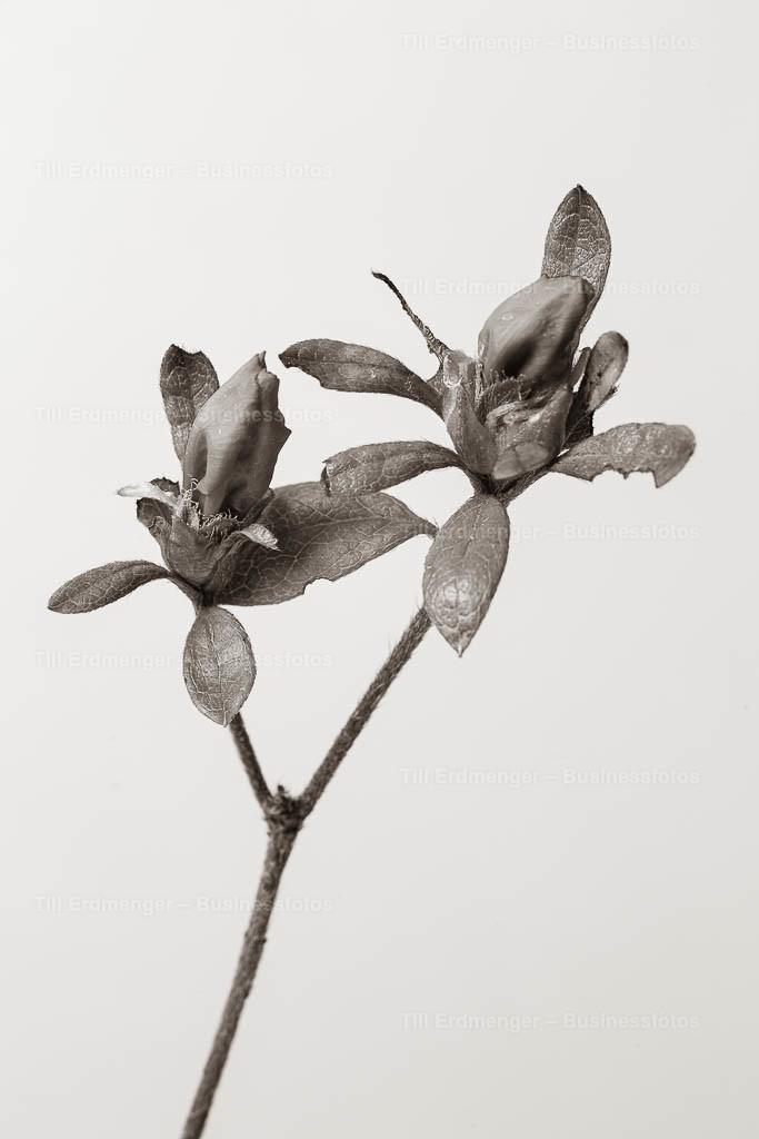 20200413_Frühlingsblüten_0042