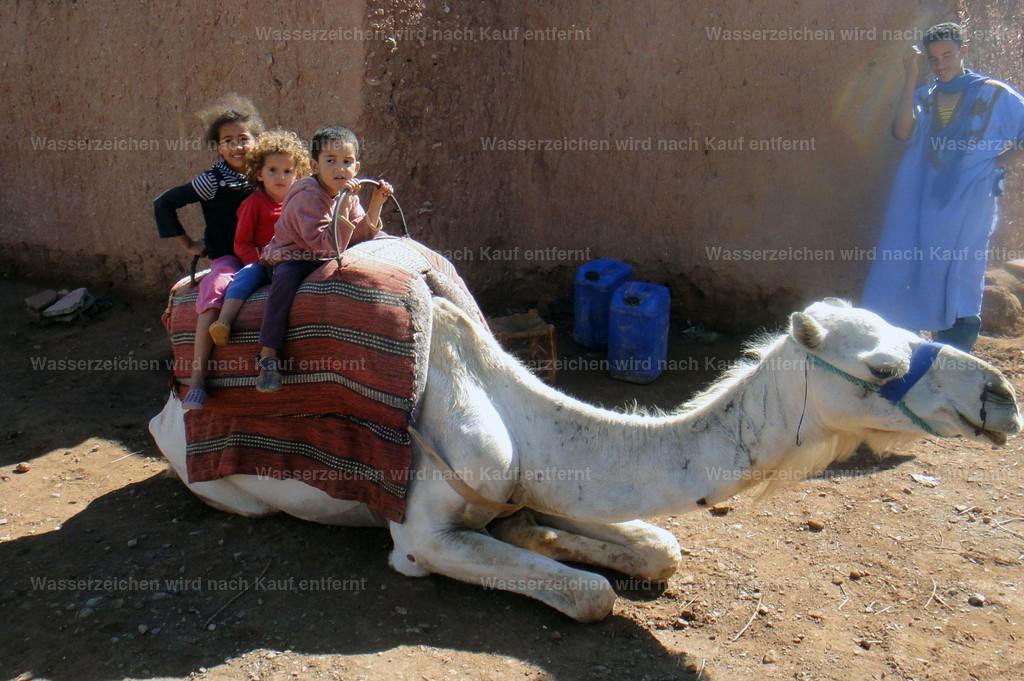 Berberkinder auf einem Dromedar | Berberkinder auf einem Dromedar
