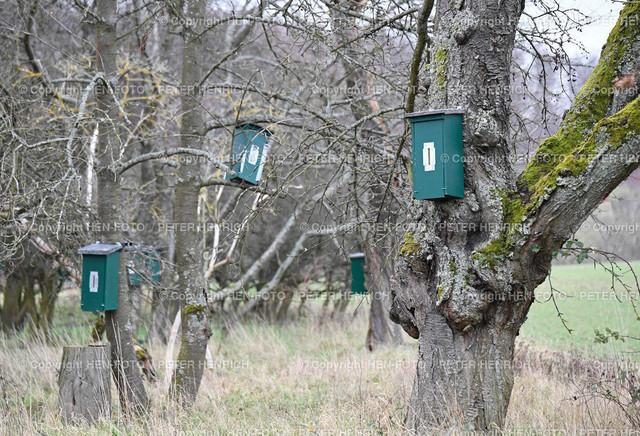 Hornissenkasten auf Streuobstwiese | Hornissenkasten auf Streuobstwiese ©HEN-FOTO (Peter Henrich)