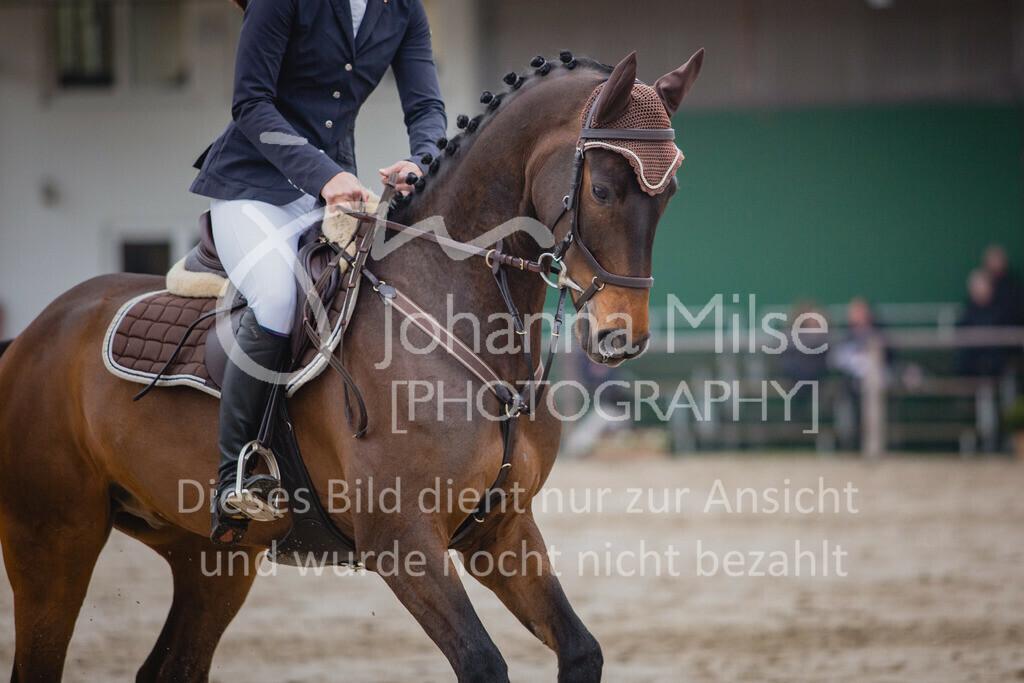 190404_Frühlingsfest_Sprpf-L-116 | Frühlingsfest Herford 2019 Springpferdeprüfung Kl. L
