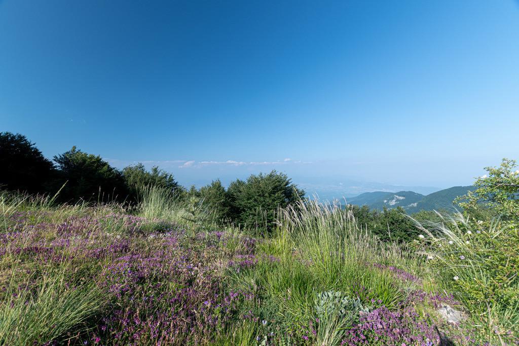 20190706-Gras on greek mountain
