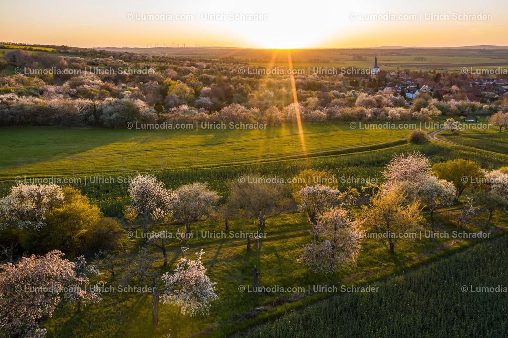 10049-51355 - Kirschblüte bei Eilenstedt