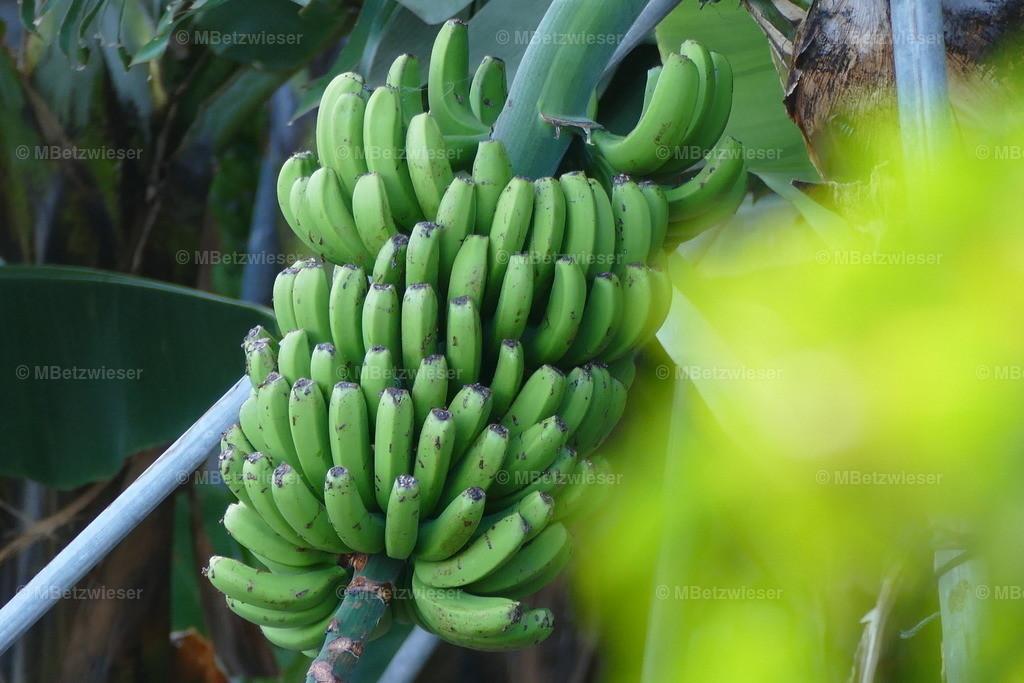 P1000122 | Der Hauptwirtschaftszweig auf La Palma