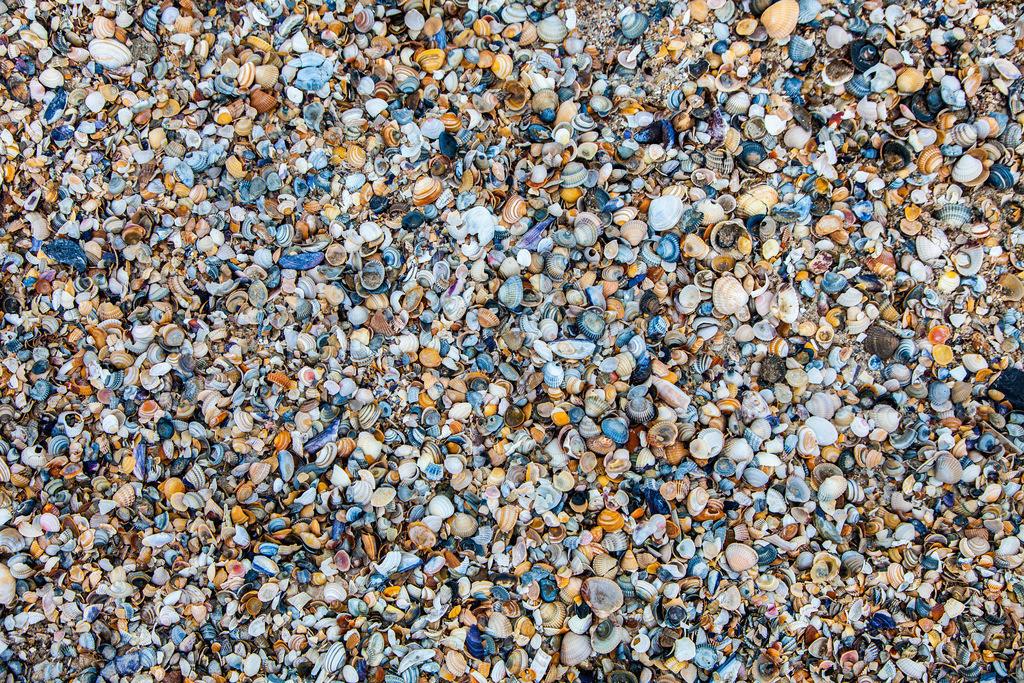JT-130327-032   Nordsee Insel Spiekeroog, Ostfriesland. Muscheln am Strand.