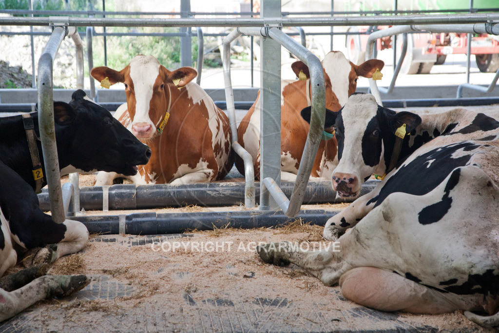 20110627-IMG_3016 | Milchkühe im Boxenlaufstall