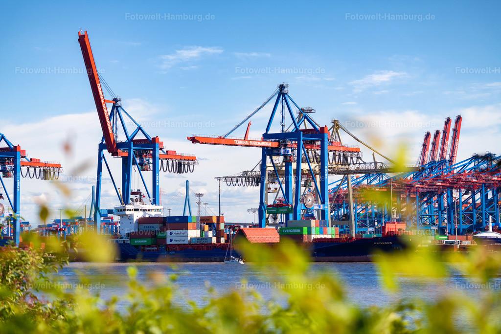 10210617 - Sommerlicher Hafen   Blick von Övelgönne zum Containerterminal Burchardkai.