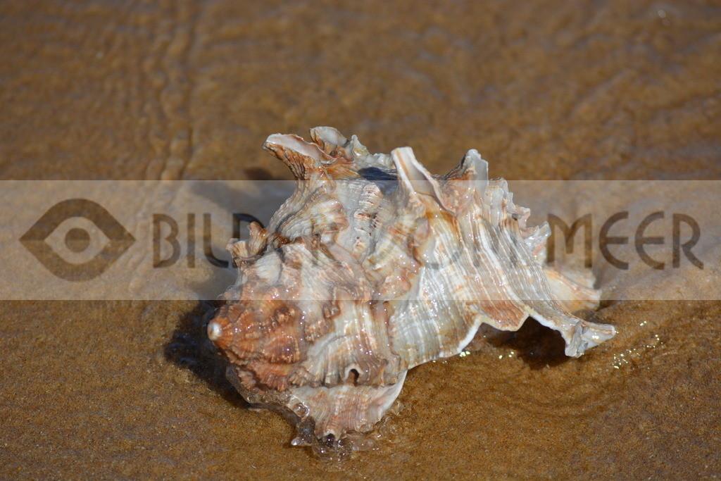Strand Bilder mit Muscheln | Muschelbilder vom Meer