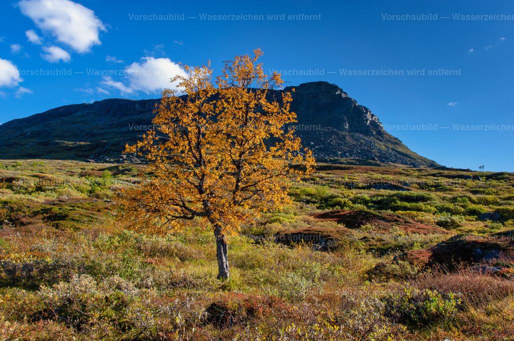 Herbst im Abisko Nationalpark   Lappland