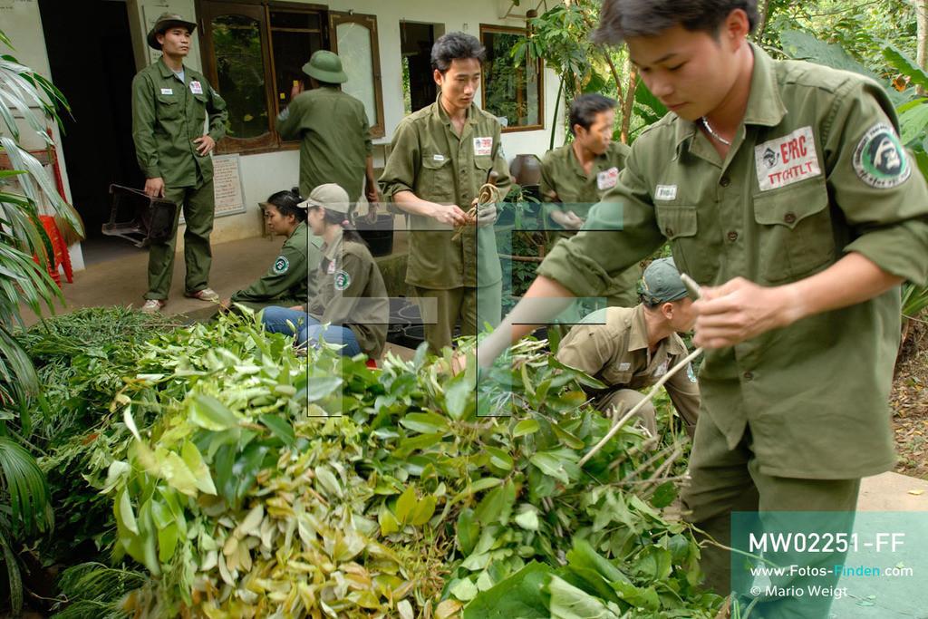 MW02251-FF | Vietnam | Provinz Ninh Binh | Reportage: Endangered Primate Rescue Center | Tierpfleger sortieren spezielle Blätter für die Fütterung. Der Deutsche Tilo Nadler leitet das Rettungszentrum für gefährdete Primaten im Cuc-Phuong-Nationalpark.    ** Feindaten bitte anfragen bei Mario Weigt Photography, info@asia-stories.com **