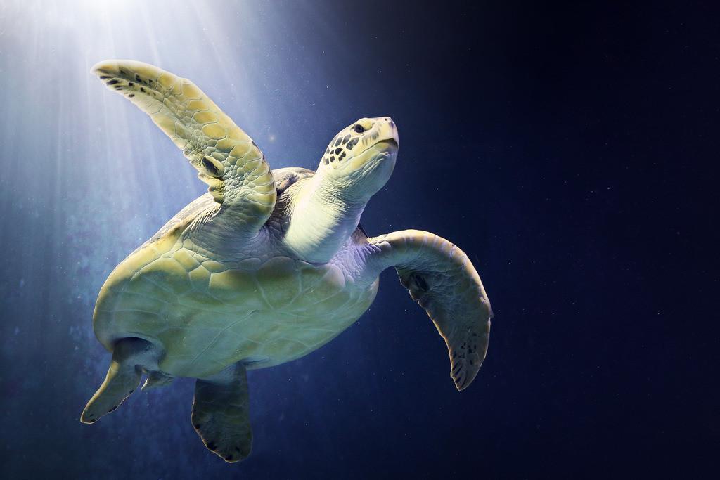 006-Schildkröte