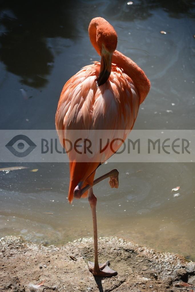 Bilder vom Meer | Flamingo Bilder aus Italien