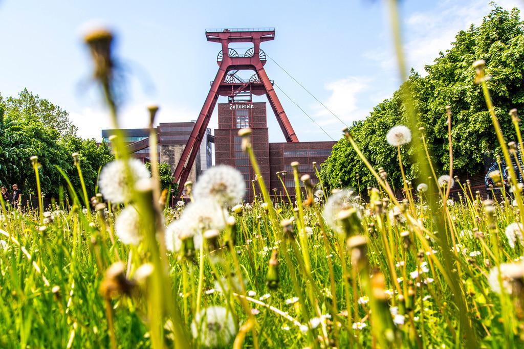 JT-160515-089 | Zeche Zollverein in Essen, UNESCO Welterbe, Doppelbock von Schacht XII, blühende Natur auf dem Zechengelände,