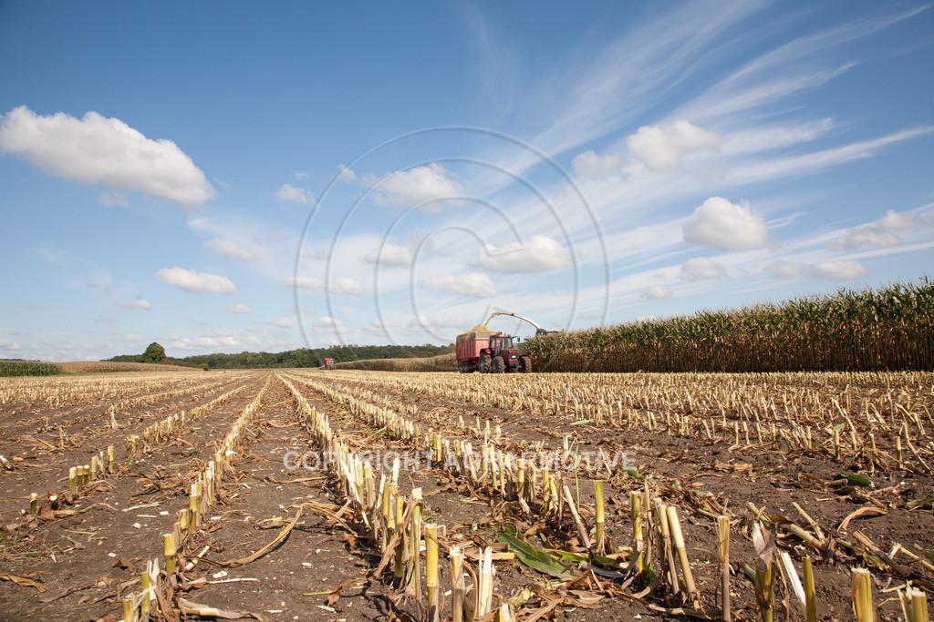 20080914-IMG_8972 | Silomais wird gehäckselt - AGRARFOTO Bilder aus der Landwirtschaft