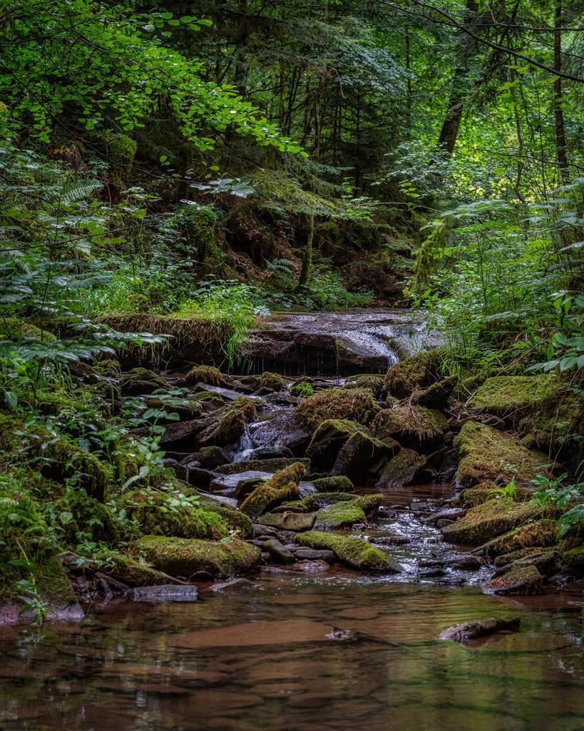 Black Forest Jungle 2
