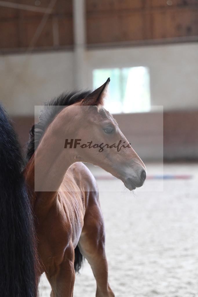 Kat-Nr. 11 HF Benicio_Thalhauser-Andersen_3221052