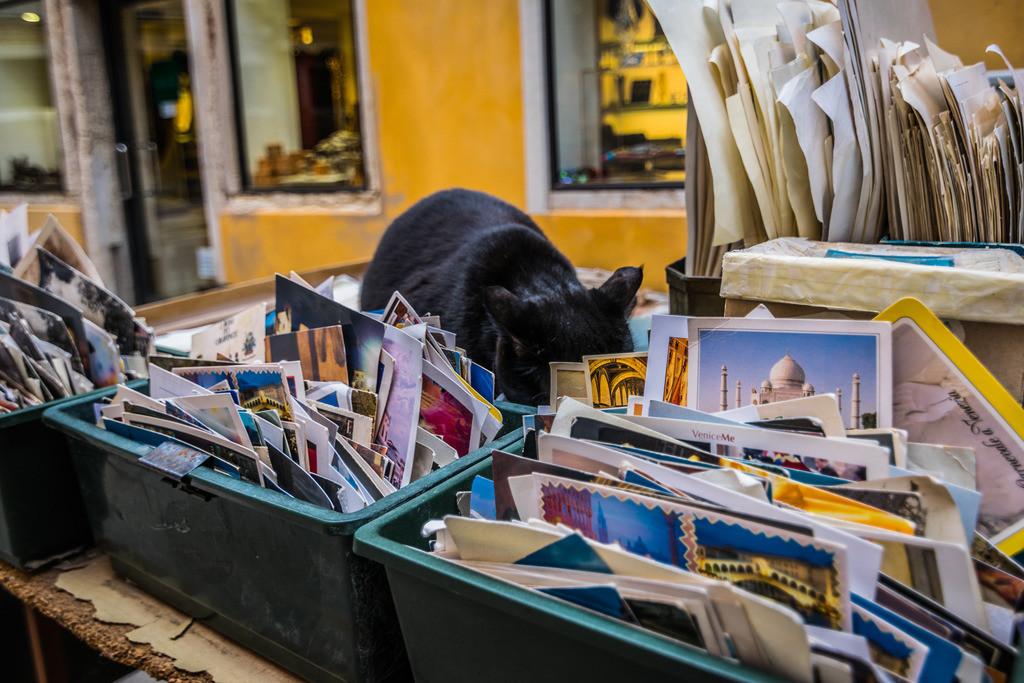 Libreria Acqa Alta-5