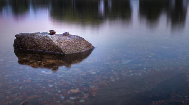 Muscheln auf Stein an der Donau