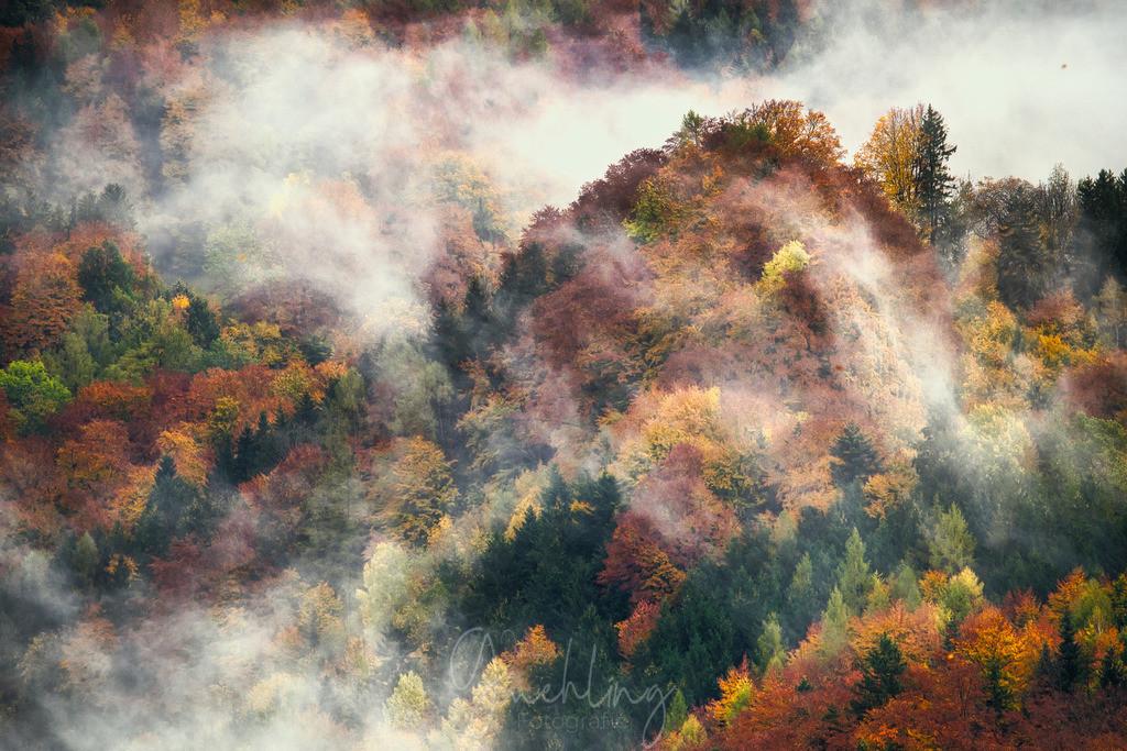 Nebelschwaden im Herbstwald | Nebel zieht über den bunten Herbstwald am Samerberg