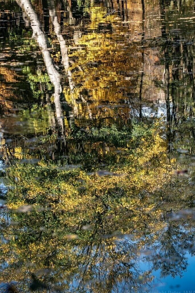 HerbstSpiegel2