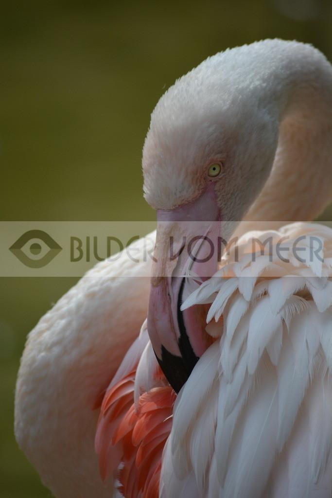 Flamingo Bilder | Bilder rosa Flamingo