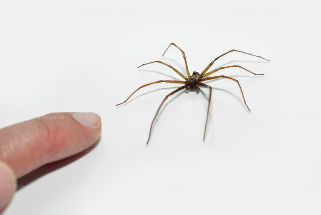 Hand neben einer Spinne
