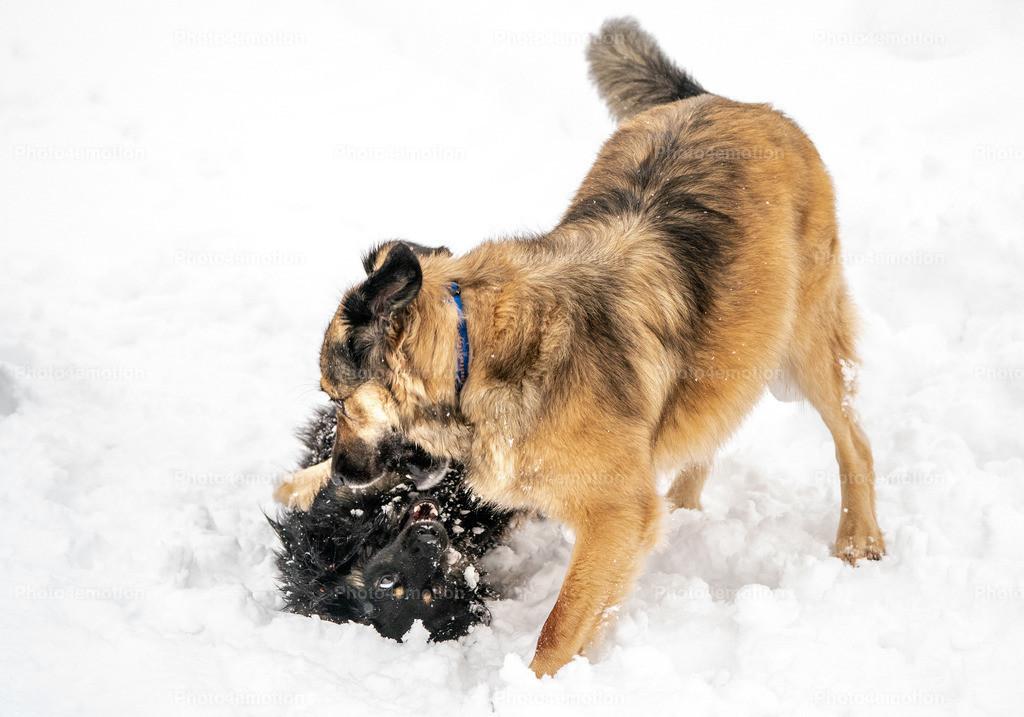 Wettkampf im tiefen Schnee