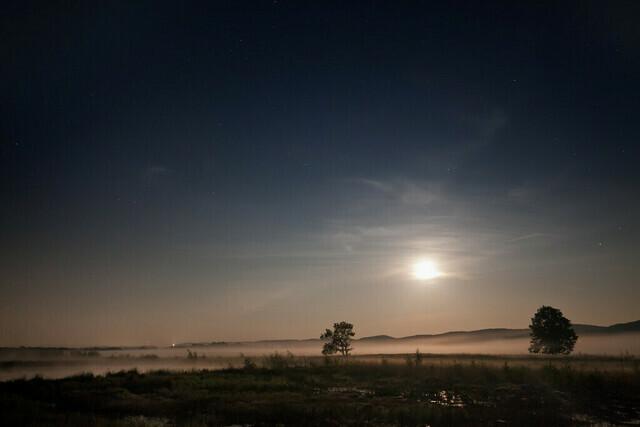 Nachts im Moor | Auf nächtlichem Streifzug durch das Große Torfmoor bei Lübbecke
