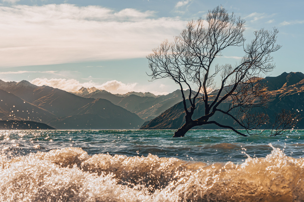 Wanaka Tree | Wanaka Tree in Neuseeland