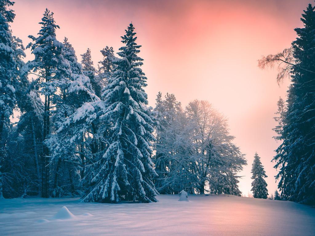 Wintertraum | Wintertraum im Schwarzwald  Wintertraum, Winter, Winterlandschaft, winterlich, Schwarzwald, verschneit, Schneelandschaft, Schneezauber
