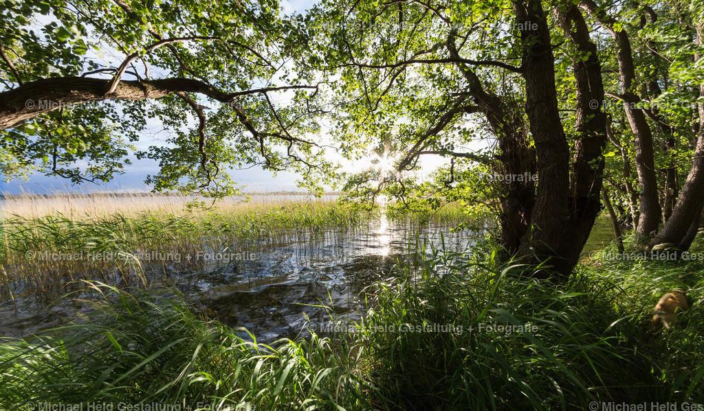 08 August | Selenter See bei Pülsen | Waldidyll mit Nachmittagssonne am Selenter See bei Pülsen