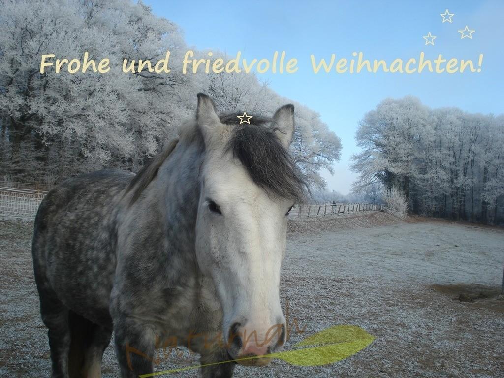 Frohe Weihnachten für Pferdefreunde