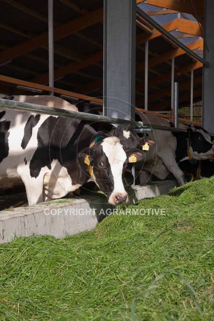 20110627-IMG_2974 | Milchkühe im Boxenlaufstall