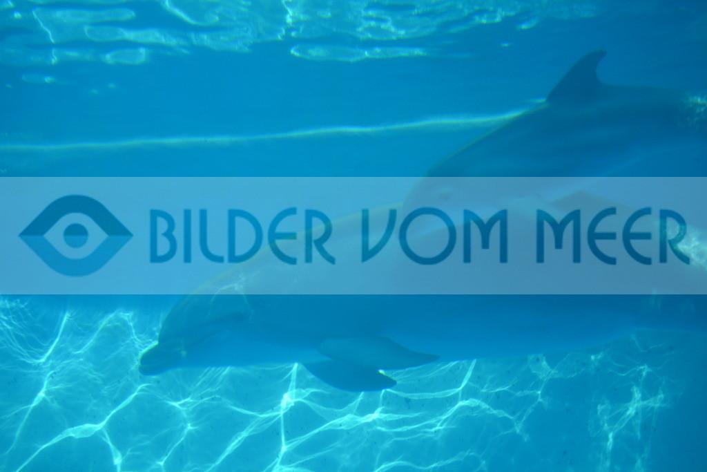 Delfin Bilder | Foto Baby Delfin