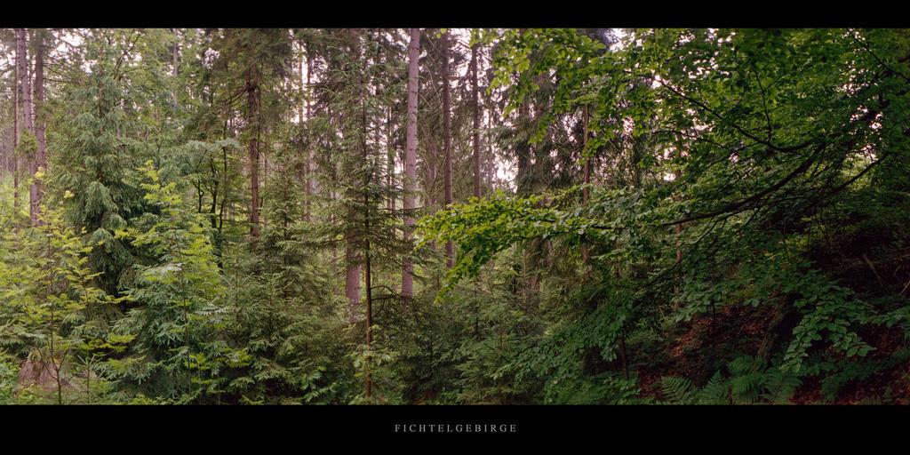 Fichtelgebirge | Mischwald im Fichtelgebirge