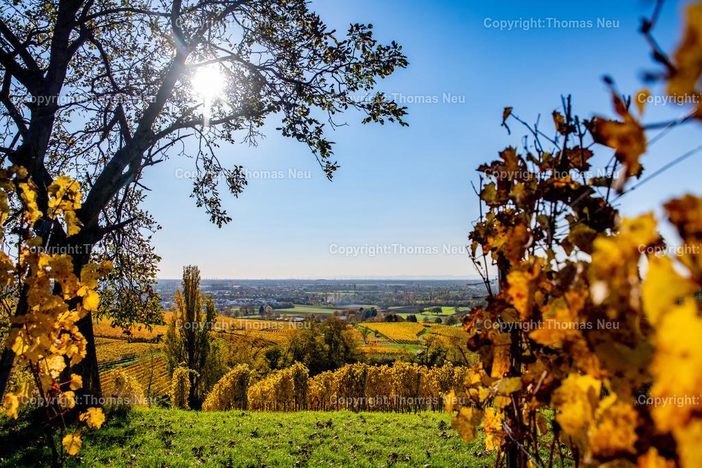 DSC_9827 | Herbst an der Hessischen Bergstrasse,  Weinberge zwischen Bensheim und Heppenheim, goldener Oktober, indian summer, ,, Bild: Thomas Neu