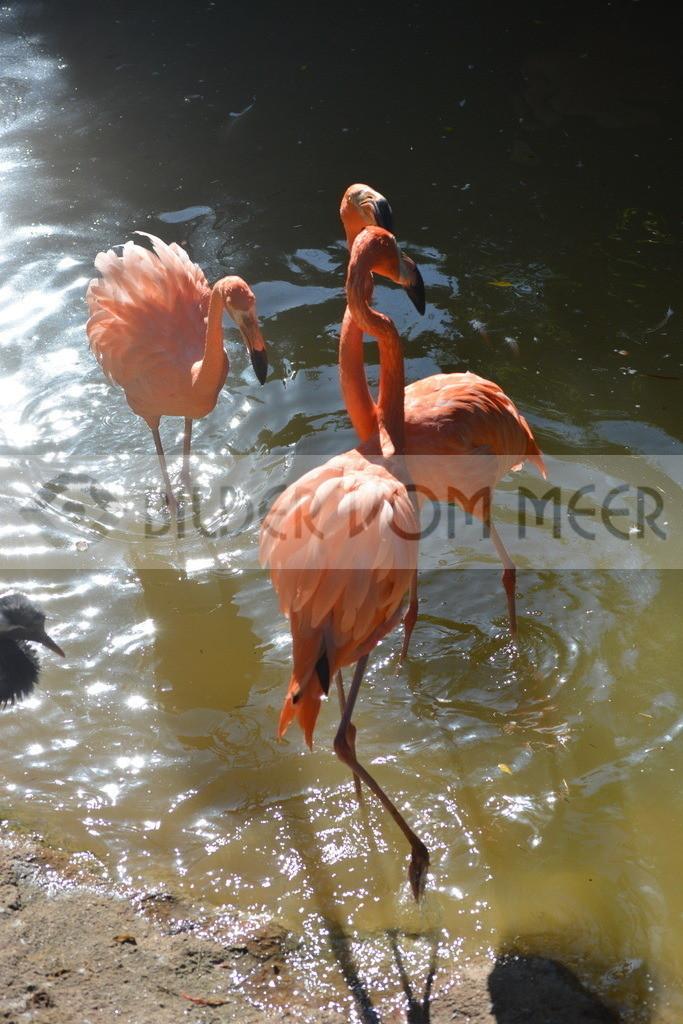 Flamingo Art Bilder | Roter Flamingo Bilder