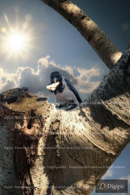 Rabe 1 - Vorschaubild | Krähe beim Nestraub