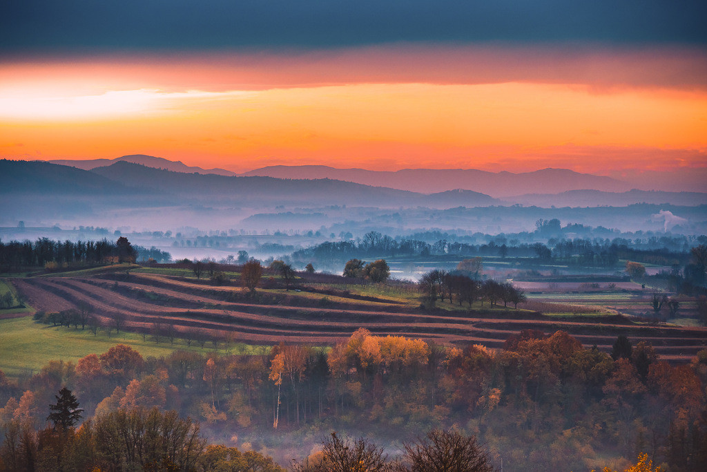 Weinreben bei Kippenheim | Herbstliche Morgenstimmung in den Weinbergen bei Kippenheim