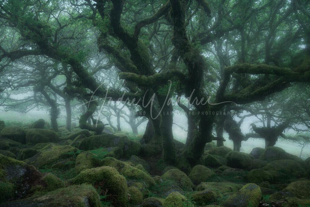 Fangorn Wald