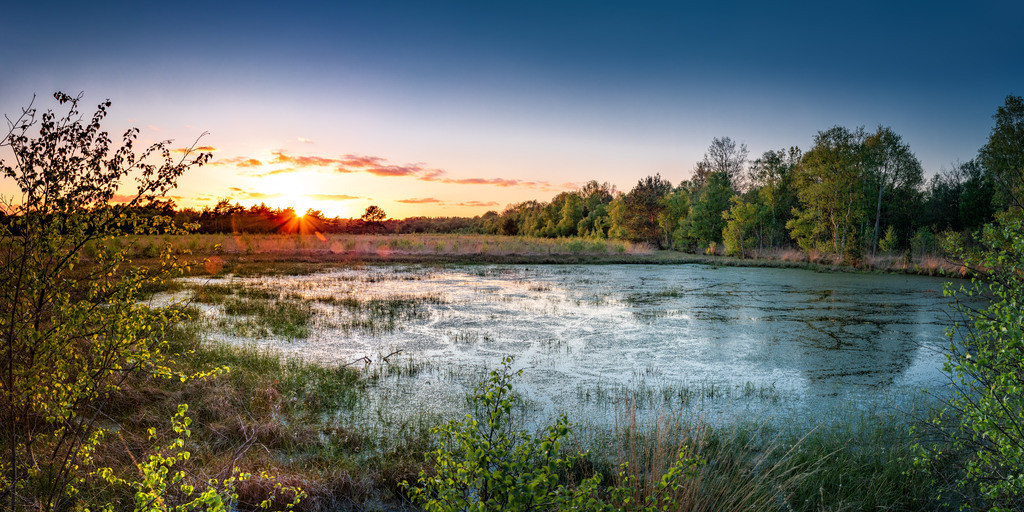 Sonnenuntergang im Hamberger Moor   Sonnenuntergang im Hamberger Moor. Frühling 2020