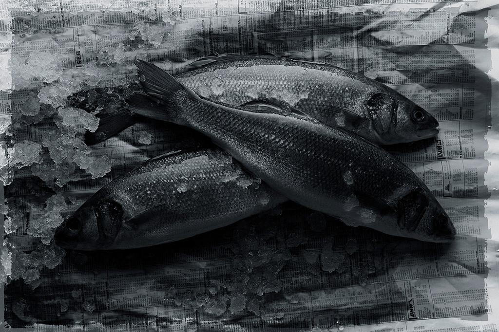 Loup de mer | frischer Loup de mer auf Zeitungspapier