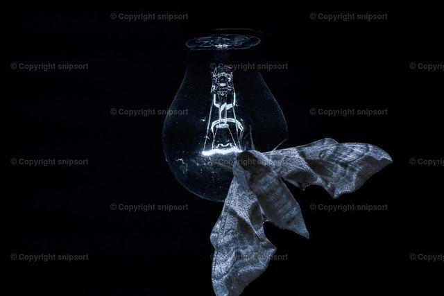 Motte auf einer Glühbirne  | Ein fetter Nachtfalter sitzt im Dunkeln auf einer schwach leuchtenden Glühlampe